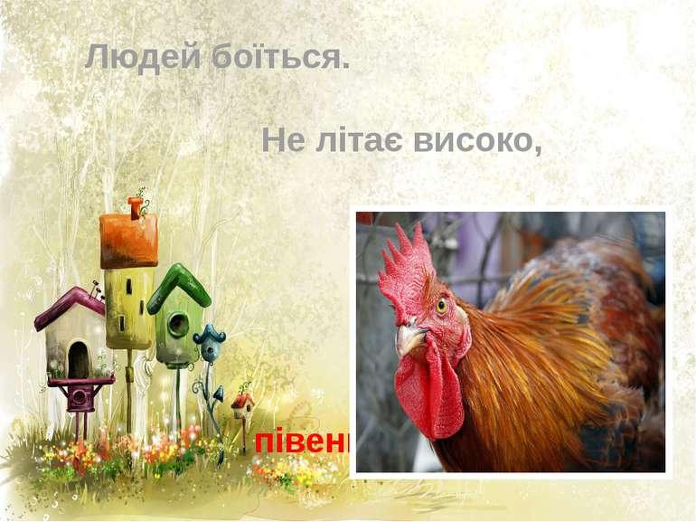 """4 Що за птах - Людей боїться. Не літає високо, А співає """"Ко-ко-ко""""? півень"""