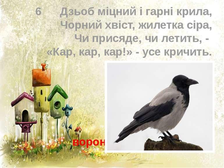 6 Дзьоб міцний і гарні крила, Чорний хвіст, жилетка сіра, Чи присяде, чи лети...