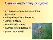 Ознаки класу Павукоподібні: кутикула з шаром воскоподібної речовини; чотири п...