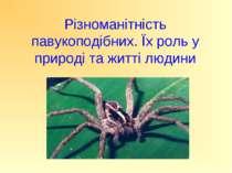 Різноманітність павукоподібних. Їх роль у природі та житті людини