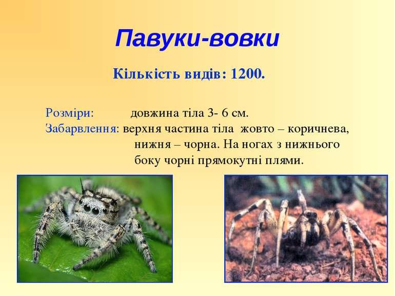 Кількість видів: 1200. Розміри: довжина тіла 3- 6 см. Забарвлення: верхня час...