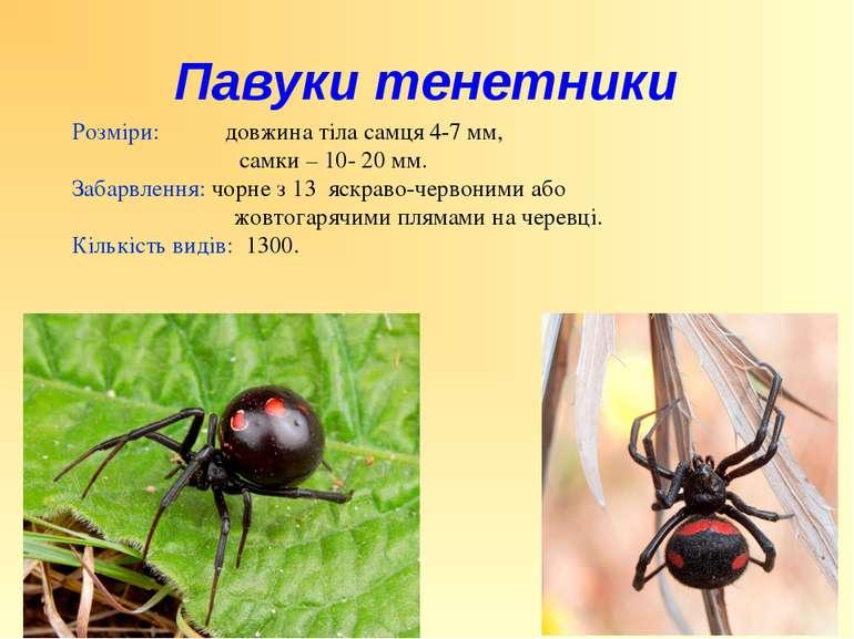 Розміри: довжина тіла самця 4-7 мм, самки – 10- 20 мм. Забарвлення: чорне з 1...