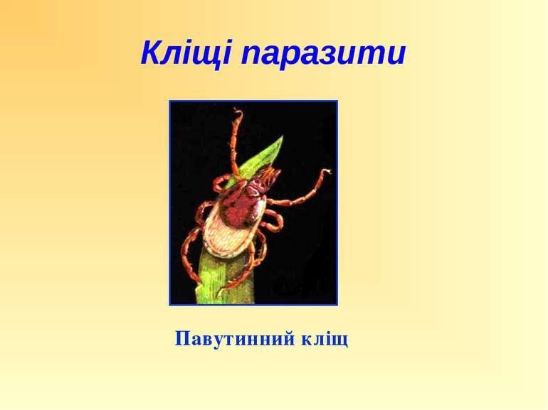 Павутинний кліщ Кліщі паразити