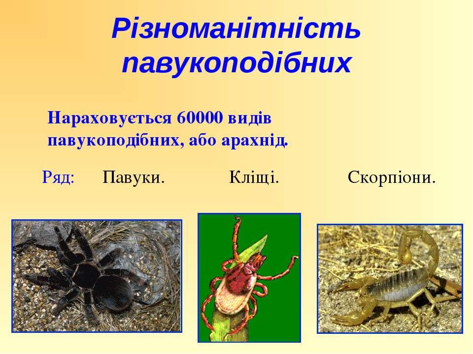 Нараховується 60000 видів павукоподібних, або арахнід. Ряд: Павуки. Кліщі. Ск...