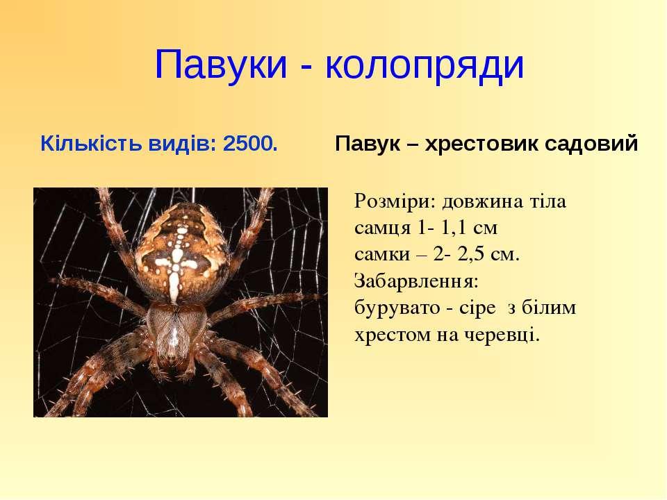 Павуки - колопряди Кількість видів: 2500. Павук – хрестовик садовий Розміри: ...