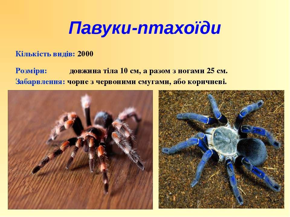 Кількість видів: 2000 Розміри: довжина тіла 10 см, а разом з ногами 25 см. За...