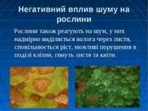 Негативний вплив шуму на рослини Рослини також реагують на шум, у них надмірн...