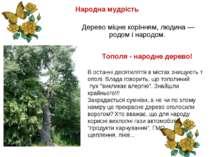 Народна мудрість  Дерево міцне корінням, людина — родом і народом. Тополя-...