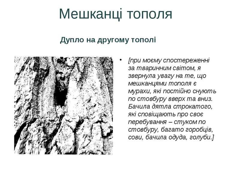 Мешканці тополя Дупло на другому тополі [при моєму спостереженні за тваринним...