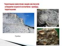Черепашки викопних видів молюсків утворили корисні копалини: крейду, черепашн...