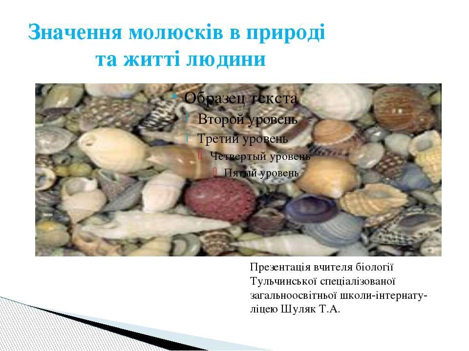 Значення молюсків в природі та житті людини Презентація вчителя біології Туль...