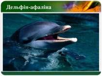 Дельфін-афаліна LOGO