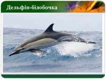 Дельфін-білобочка LOGO