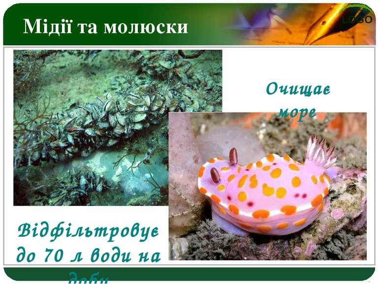 Мідії та молюски Відфільтровує до 70 л води на добу Очищає море LOGO