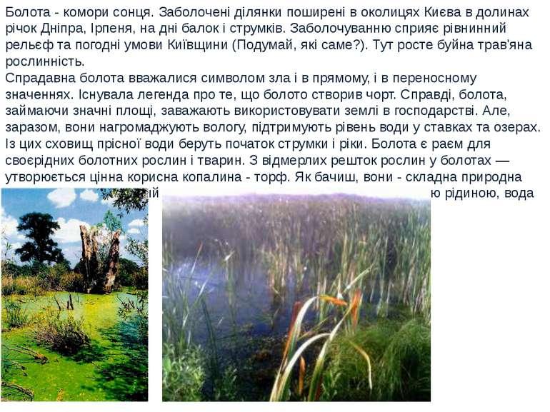 Болота - комори сонця. Заболочені ділянки поширені в околицях Києва в долинах...