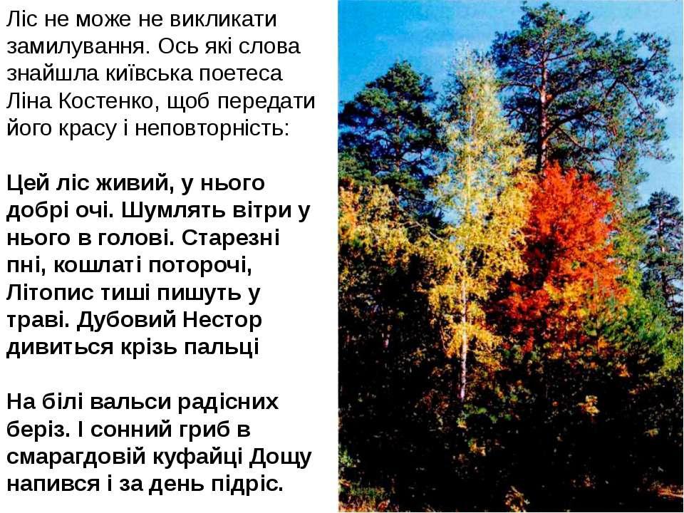 Ліс не може не викликати замилування. Ось які слова знайшла київська поетеса ...