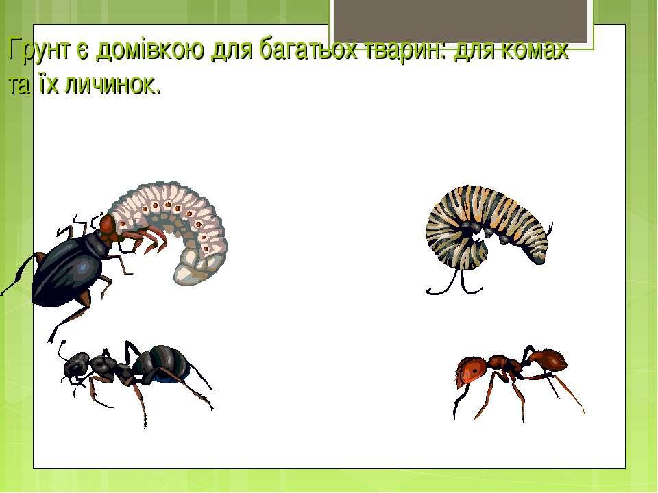 Грунт є домівкою для багатьох тварин: для комах та їх личинок.