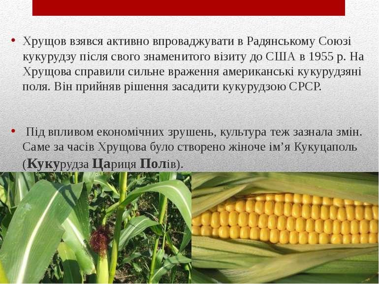 Хрущов взявся активно впроваджувати в Радянському Союзі кукурудзу після свого...