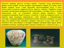 Значного розвитку досягли гончарні вироби. Глиняний посуд різноманітної форми...