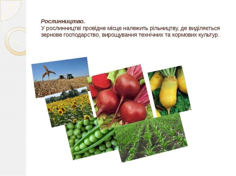 Рослинництво. У рослинництві провідне місце належить рільництву, де виділяєть...