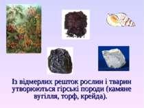 Із відмерлих решток рослин і тварин утворюються гірські породи (камяне вугілл...