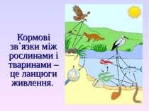 Кормові зв`язки між рослинами і тваринами – це ланцюги живлення.