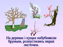 На деревах і кущах набубнявіли бруньки, розпустились перші листочки.