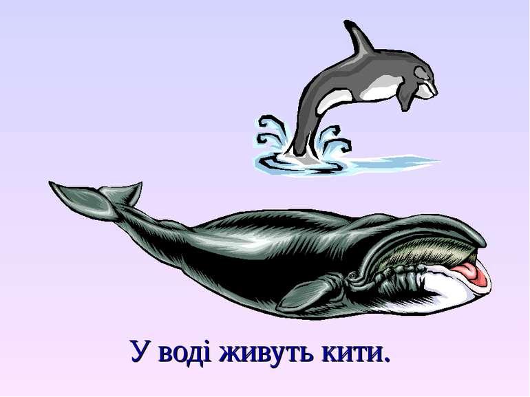 У воді живуть кити.