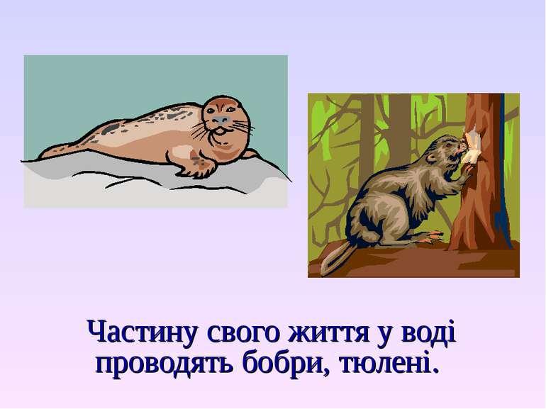 Частину свого життя у воді проводять бобри, тюлені.