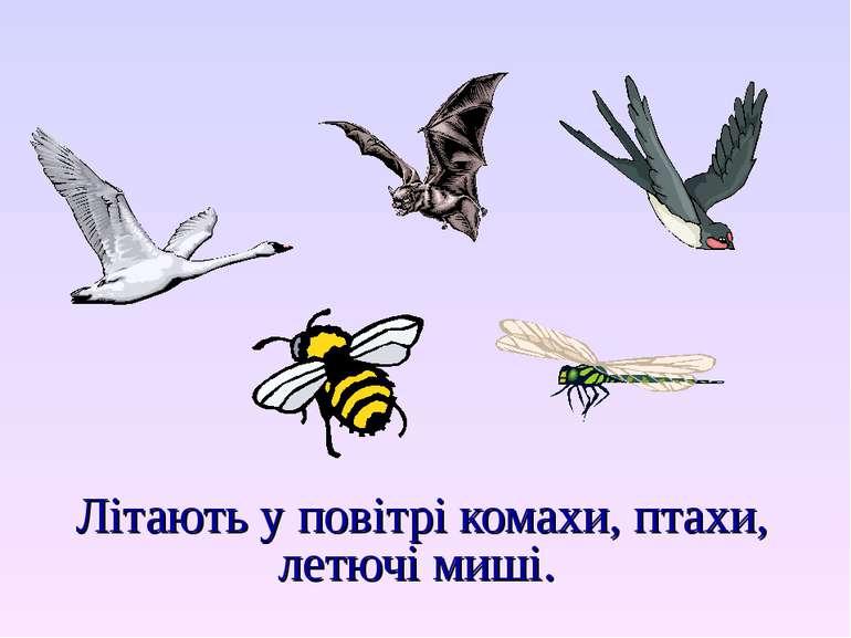 Літають у повітрі комахи, птахи, летючі миші.