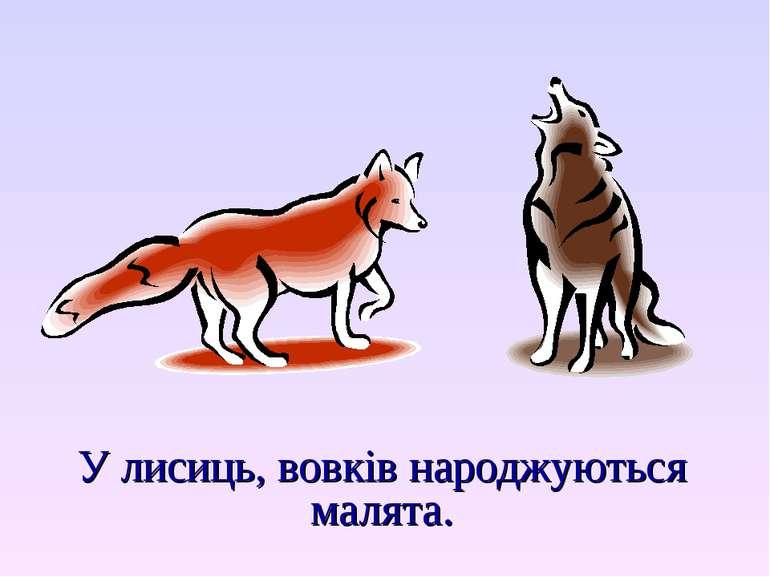 У лисиць, вовків народжуються малята.