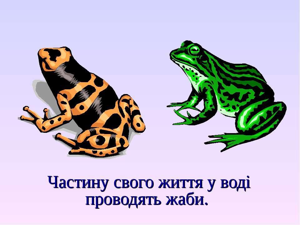 Частину свого життя у воді проводять жаби.