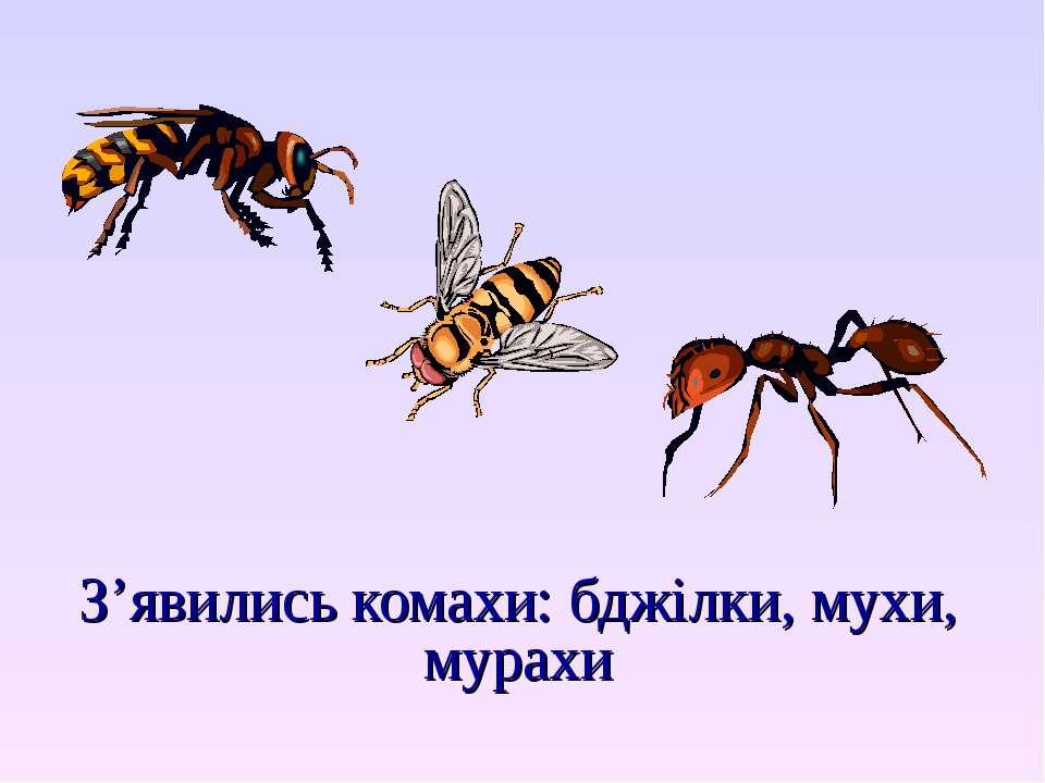 З'явились комахи: бджілки, мухи, мурахи