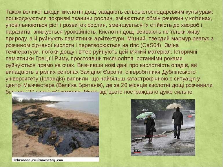Також великої шкоди кислотні дощі завдають сільськогосподарським культурам: п...