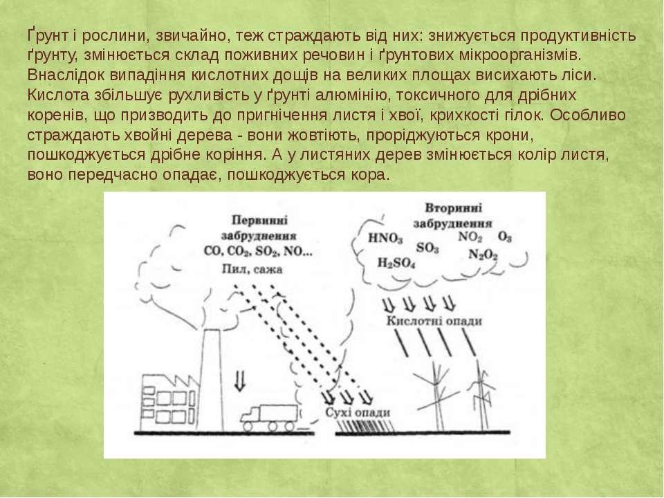 Ґрунт і рослини, звичайно, теж страждають від них: знижується продуктивність ...