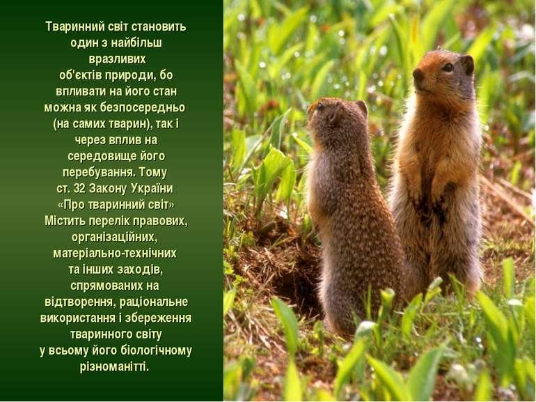 Тваринний світ становить один з найбільш вразливих об'єктів природи, бо вплив...