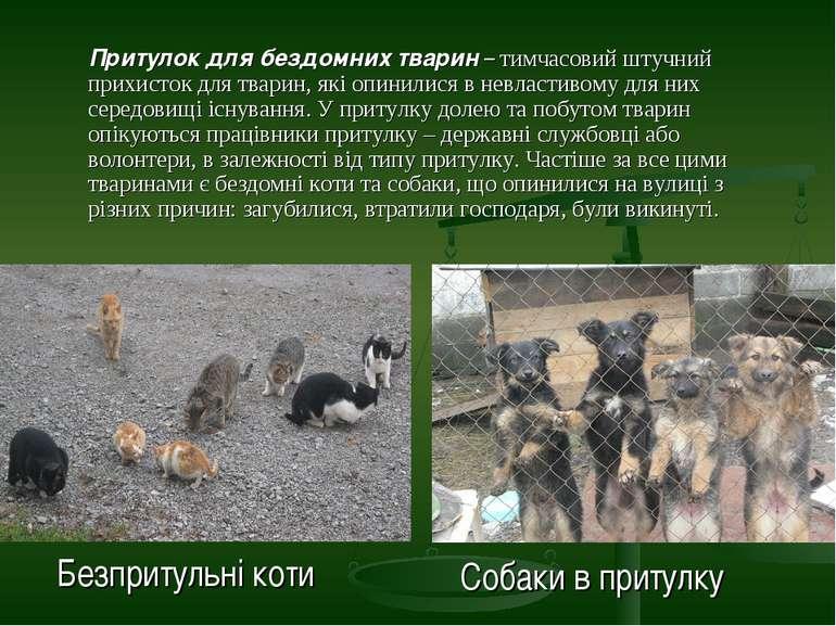 Притулок для бездомних тварин – тимчасовий штучний прихисток для тварин, які ...