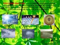 Абіотичні фактори – це сукупність умов неживої природи, що прямо чи побічно в...