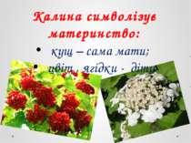 Калина символізує материнство: кущ – сама мати; цвіт , ягідки - діти
