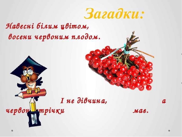Навесні білим цвітом, восени червоним плодом. І не дівчина, а червоні стрічки...