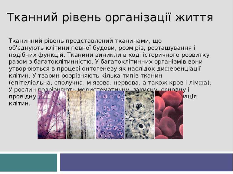 Тканний рівень організації життя Тканинний рівень представленийтканинами, що...