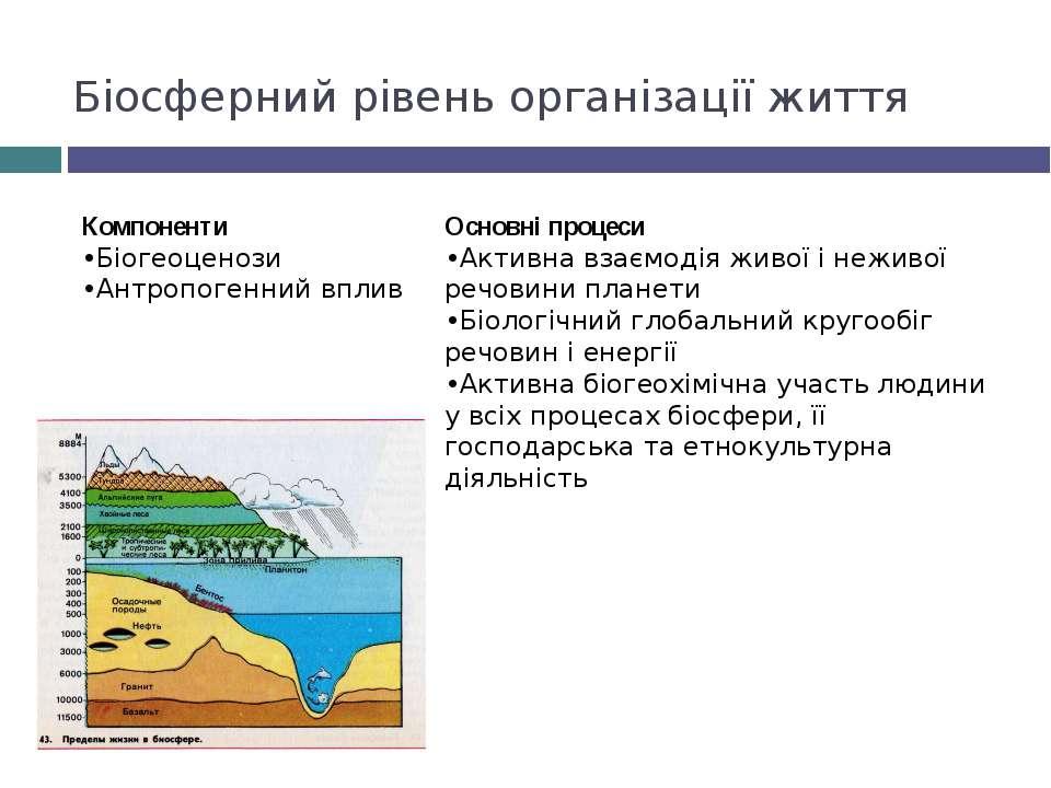 Біосферний рівень організації життя Компоненти •Біогеоценози •Антропогенний в...