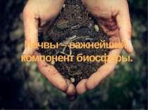 Почвы – важнейший компонент биосферы.