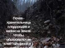 Почва - хранительница плодородия и жизни на Земле. Чтобы образовался ее слой ...