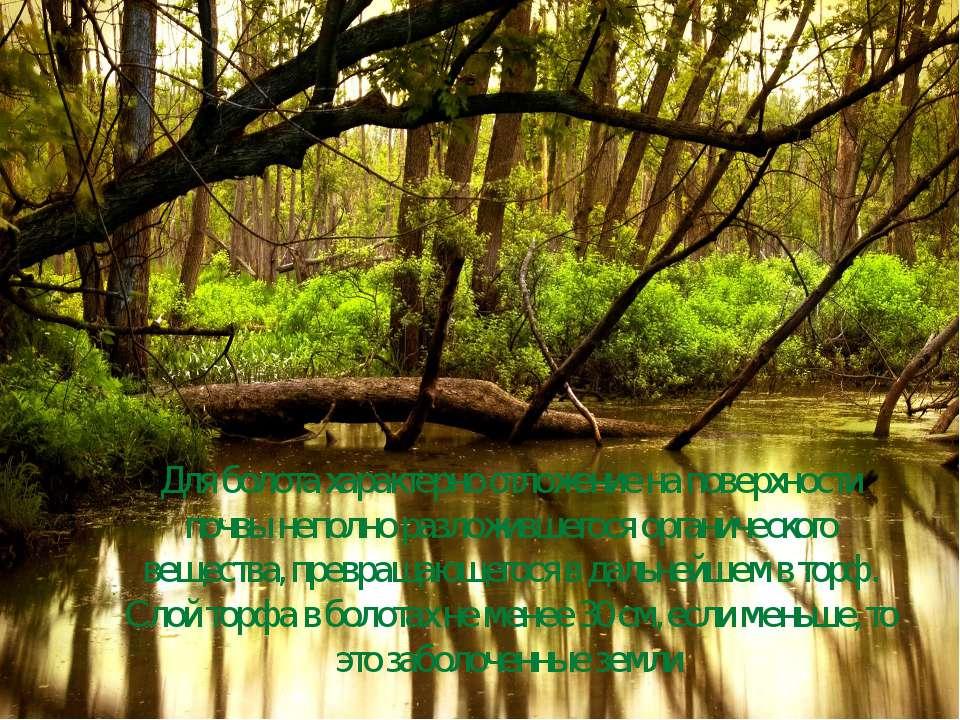 Для болота характерно отложение на поверхности почвы неполно разложившегося о...