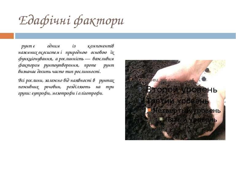 Едафічні фактори Ґрунтє одним із компонентів наземнихекосистемі природною ...