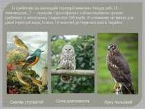Із хребетних на заповідній території виявлено 9 видів риб, 11— земноводних, ...