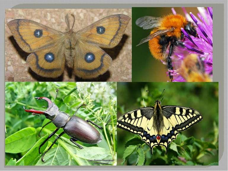 Фауна Із фауни безхребетних на сьогодні виявлено понад 2500 видів комах, з як...