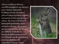 Одним з найбільш відомих способів тестування косметики є тест Драйза. Кролико...