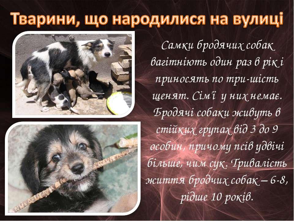 Cамки бродячих собак вагітніють один раз в рік і приносять по три-шість щенят...